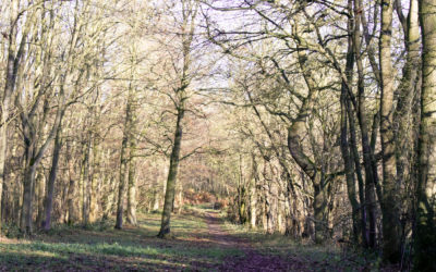 Rigsby Wood